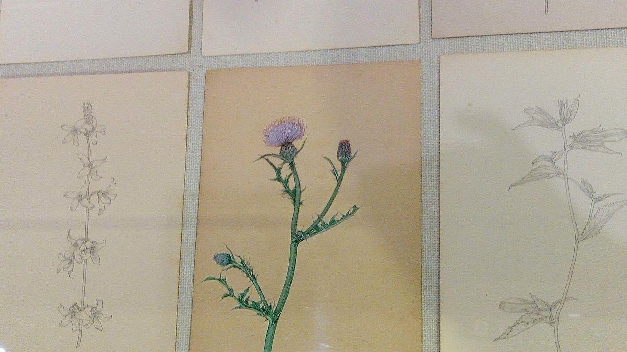 消しゴムも使わず鉛筆だけで書かれた江上茂雄の作品