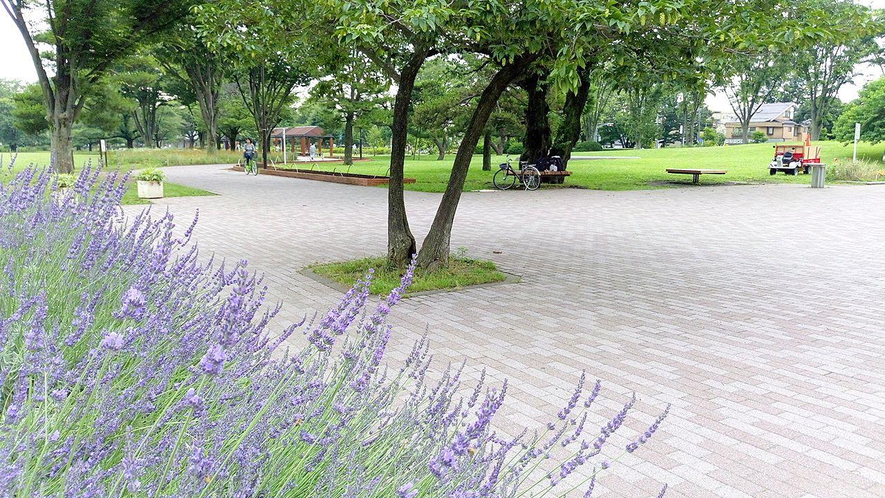 武蔵野中央公園にはさまざまな花々が綺麗です