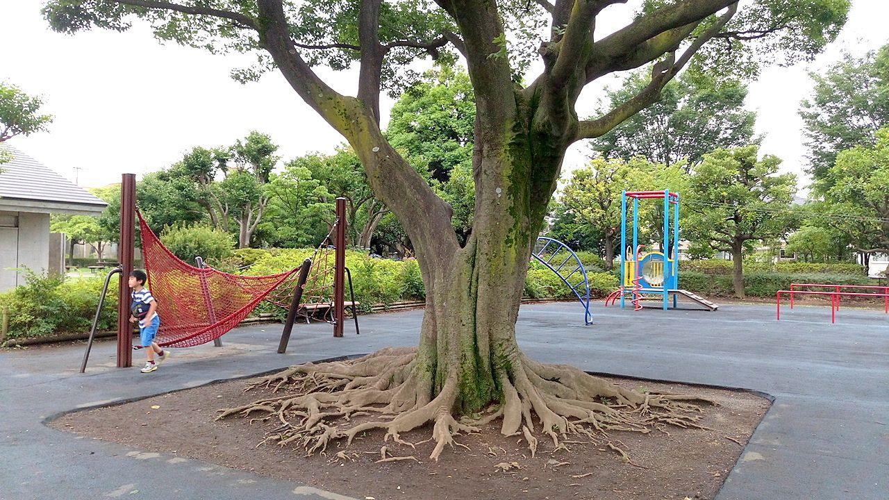 武蔵野中央公園のこどもの広場