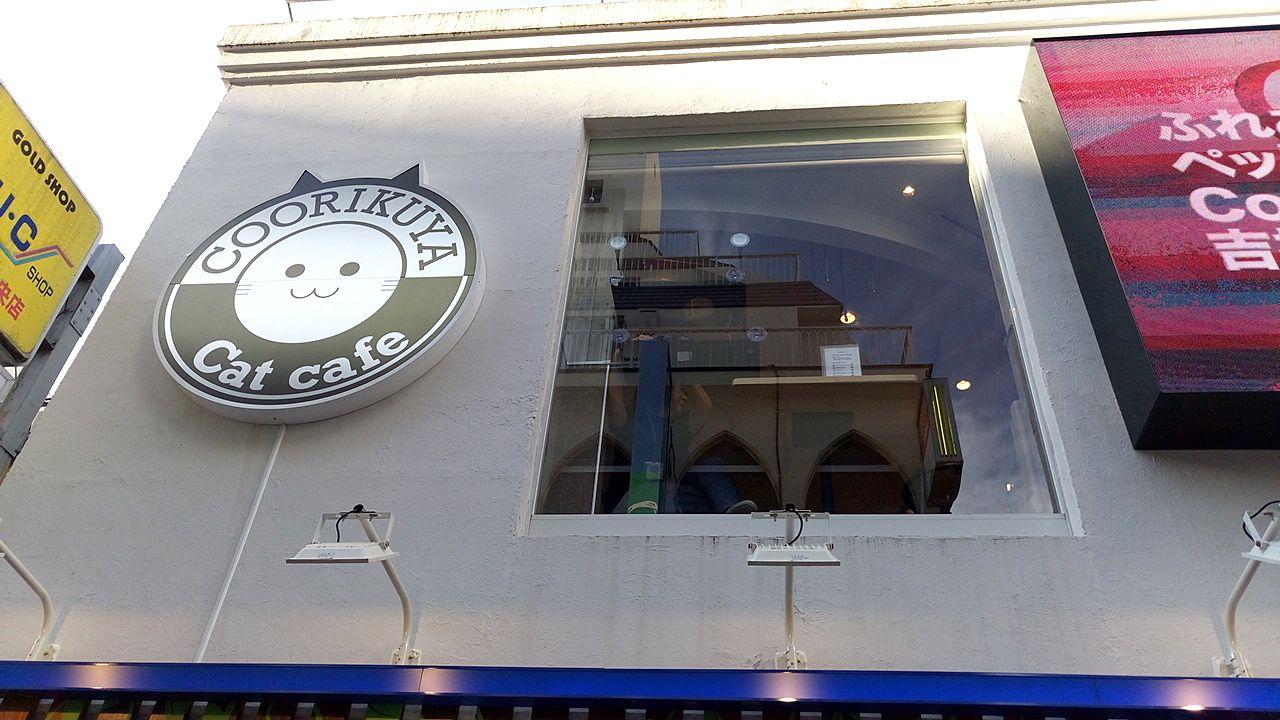 吉祥寺元町通りにキャットカフェがオープン