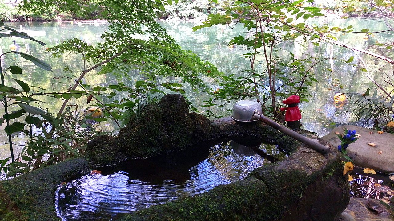 井之頭公園の弁財天にある苔