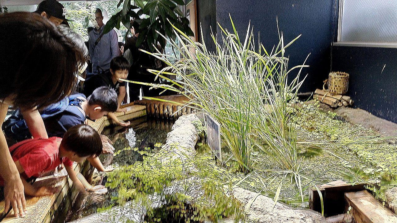 水生物館では手で触れます。井之頭公園
