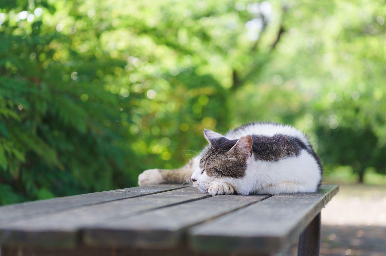 「ネコのように生きる」地域で心地よく暮らすために
