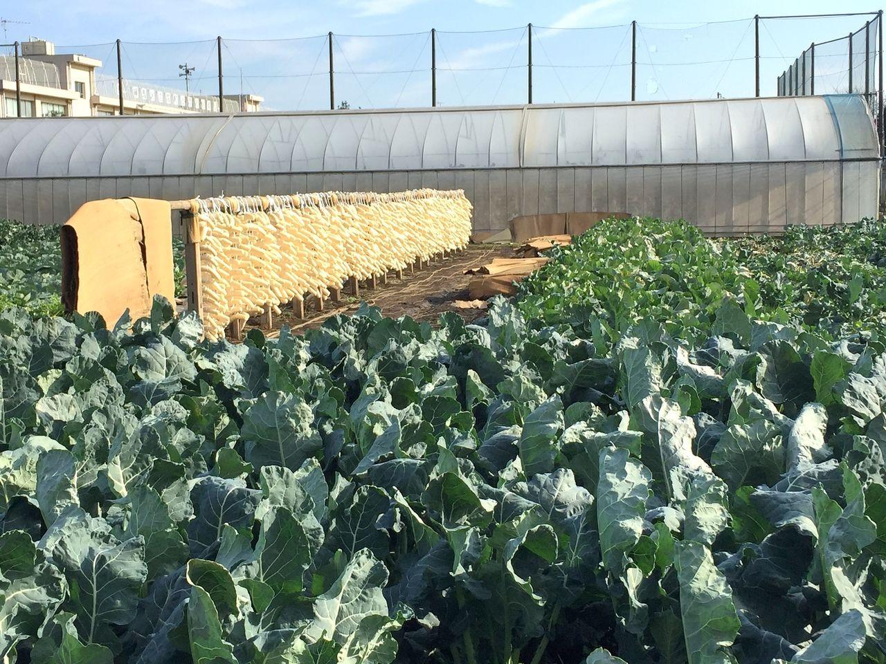 武蔵野市農家
