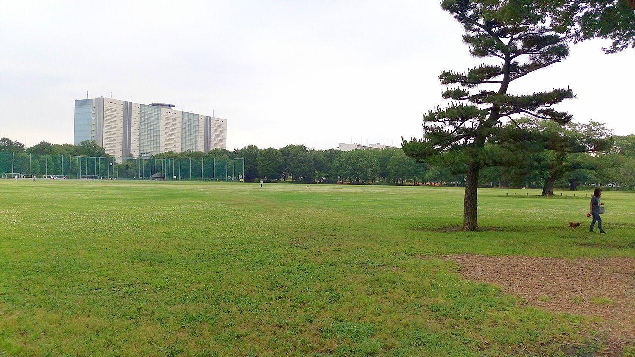 都立武蔵野中央公園・昔は米軍住宅地だった