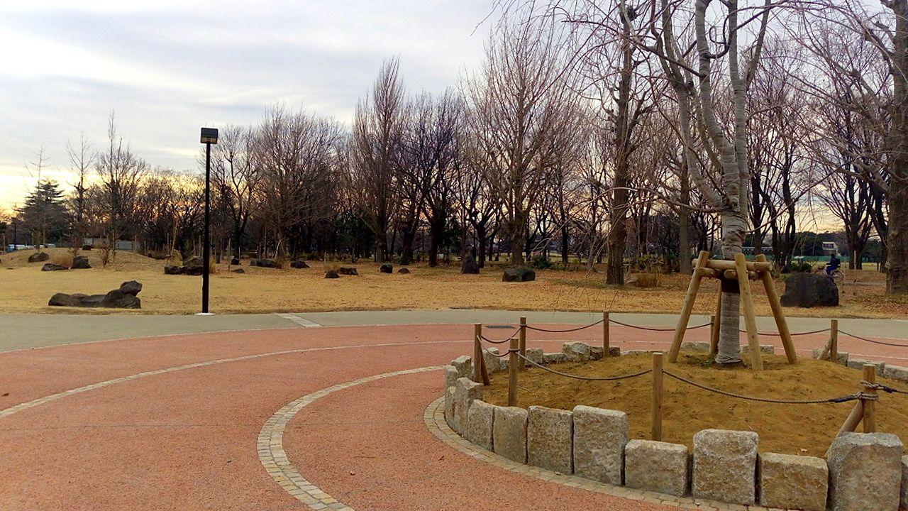 武蔵野中央公園は整備されました