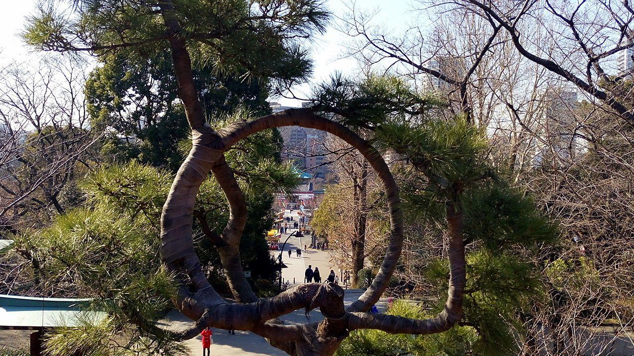 寛永寺 清水観音堂の月の松を覗くと不忍池弁天堂が見えます