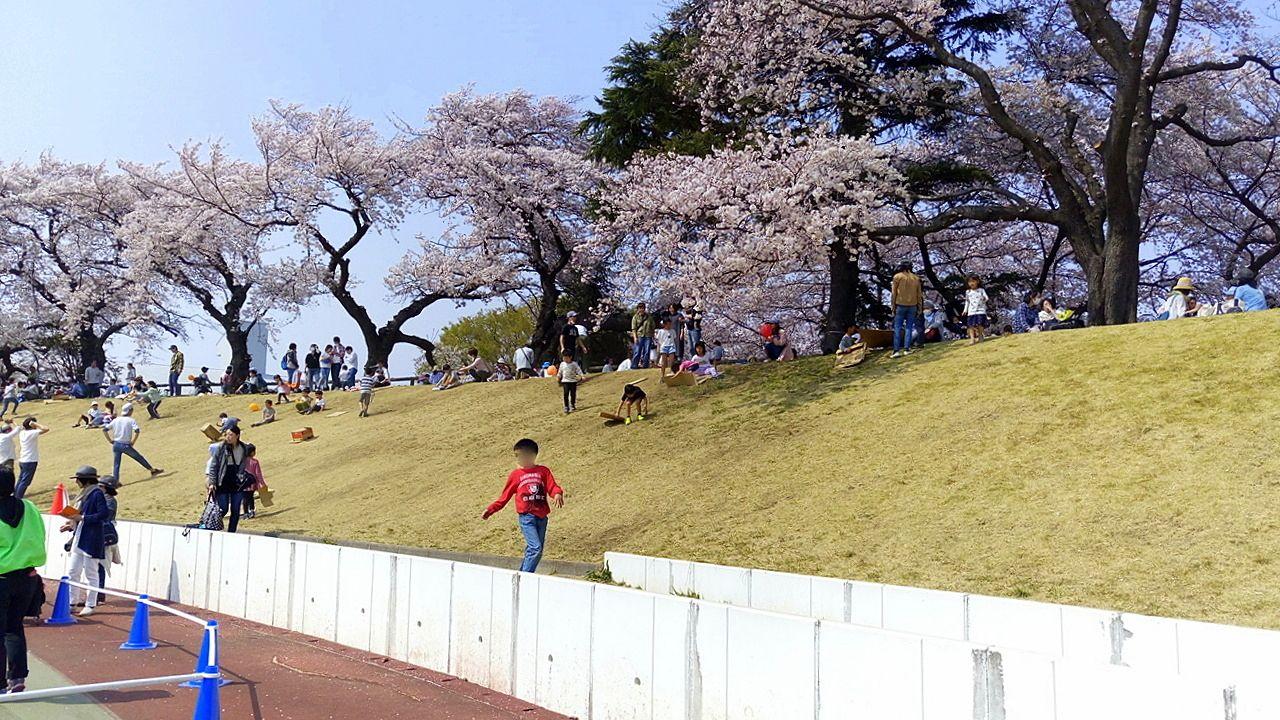 武蔵野陸上競技場は桜満開です