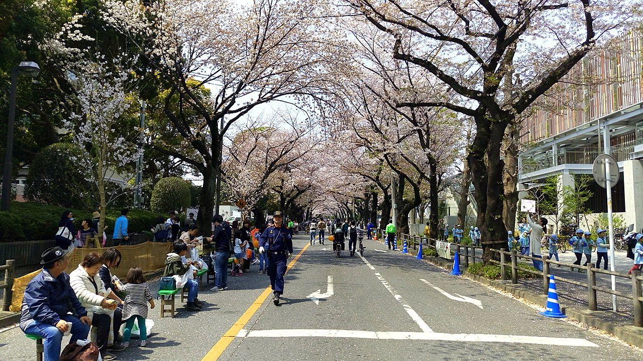 武蔵野桜まつり2019