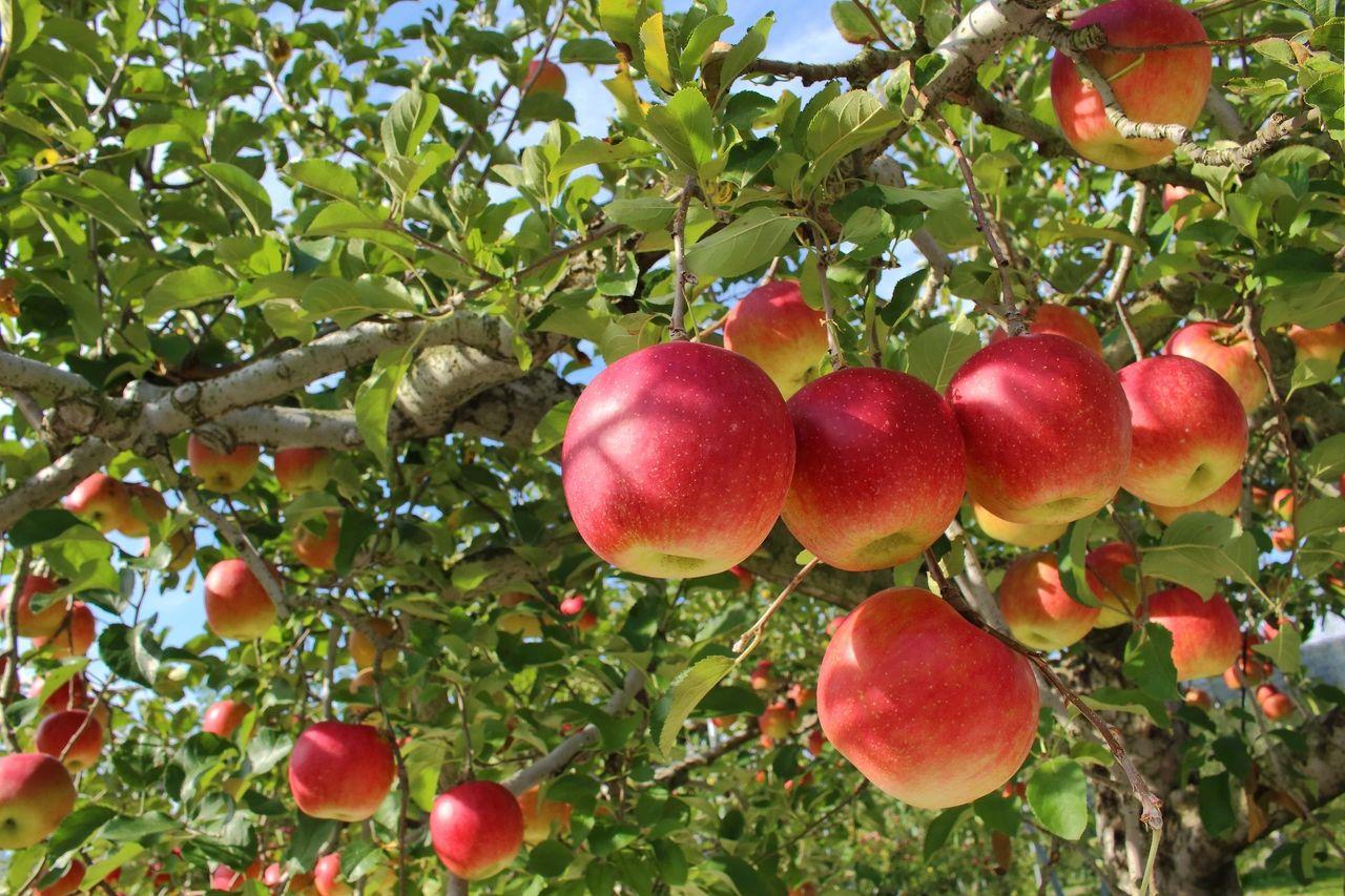 武蔵境こども園3歳児向け事業「りんご組」