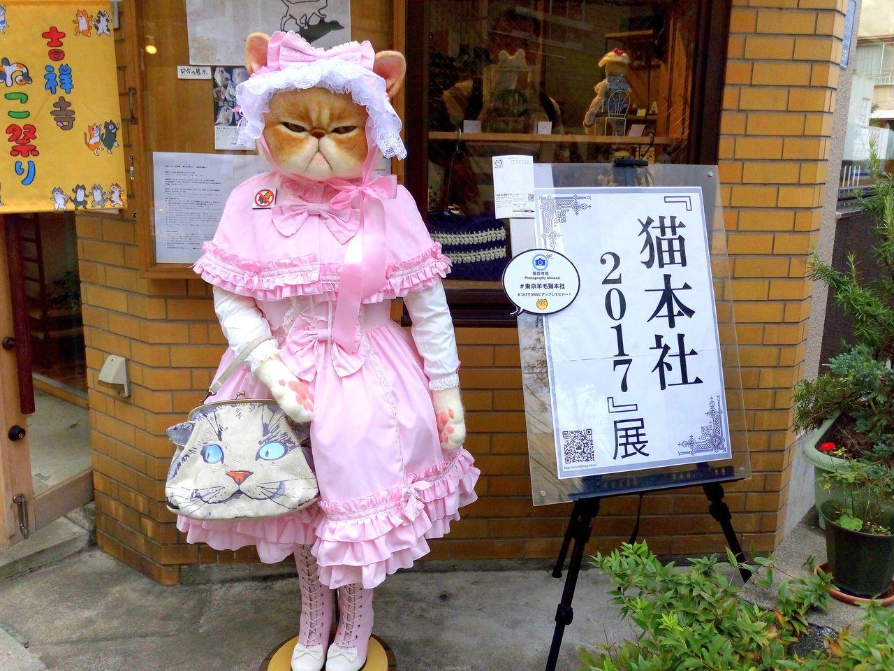 吉祥寺ねこ祭り、猫本社