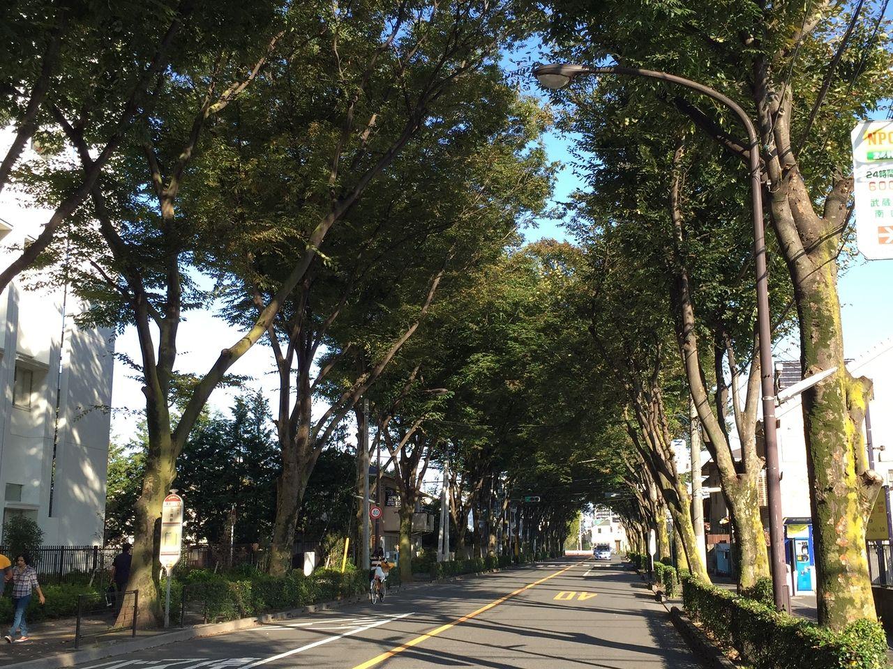 武蔵境駅のケヤキ並木