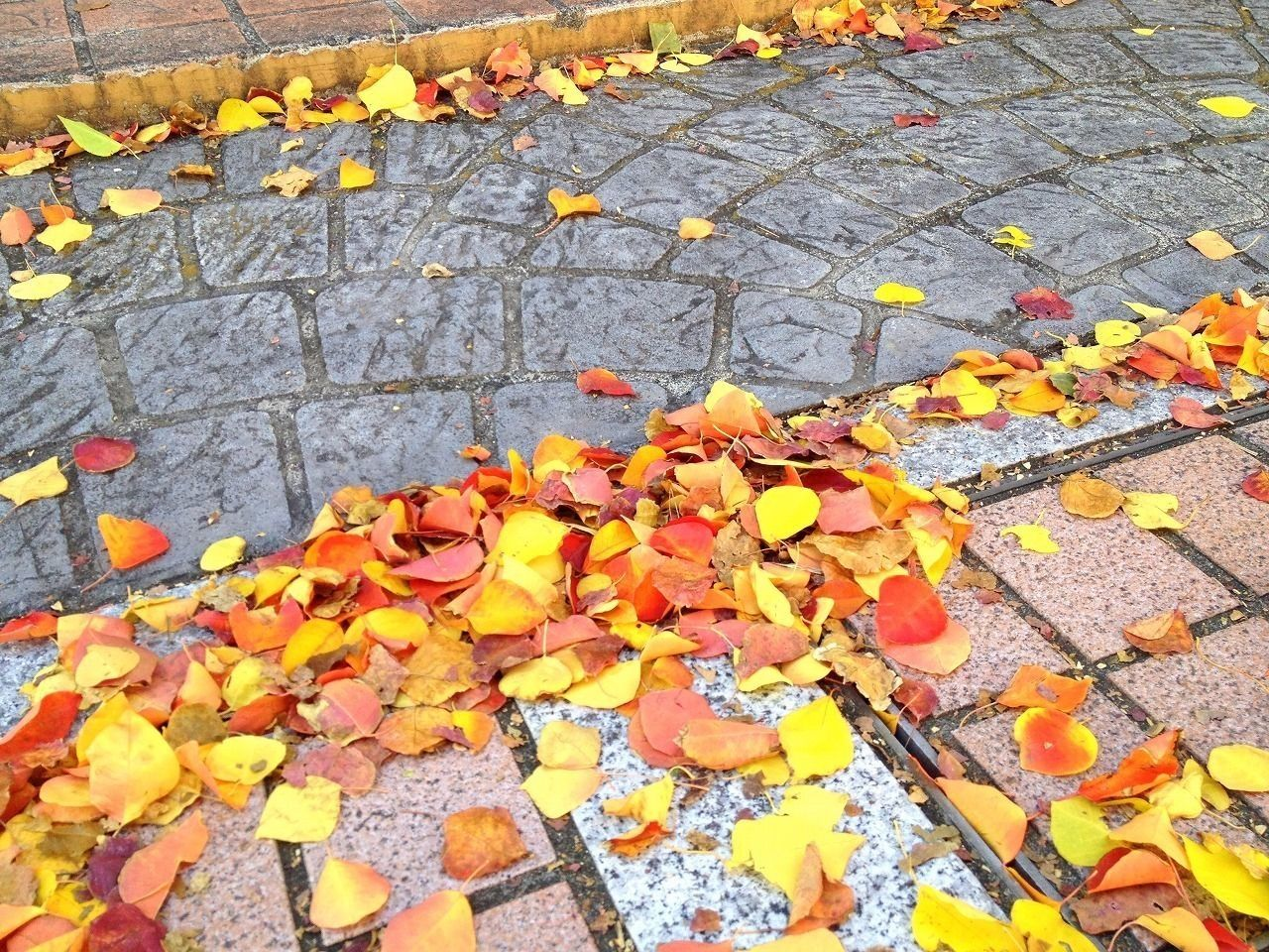井之頭公園や風の散歩道の紅葉も進んでいます