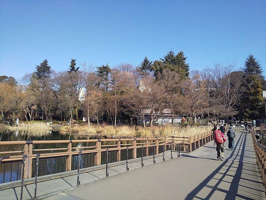 井之頭公園の七井橋