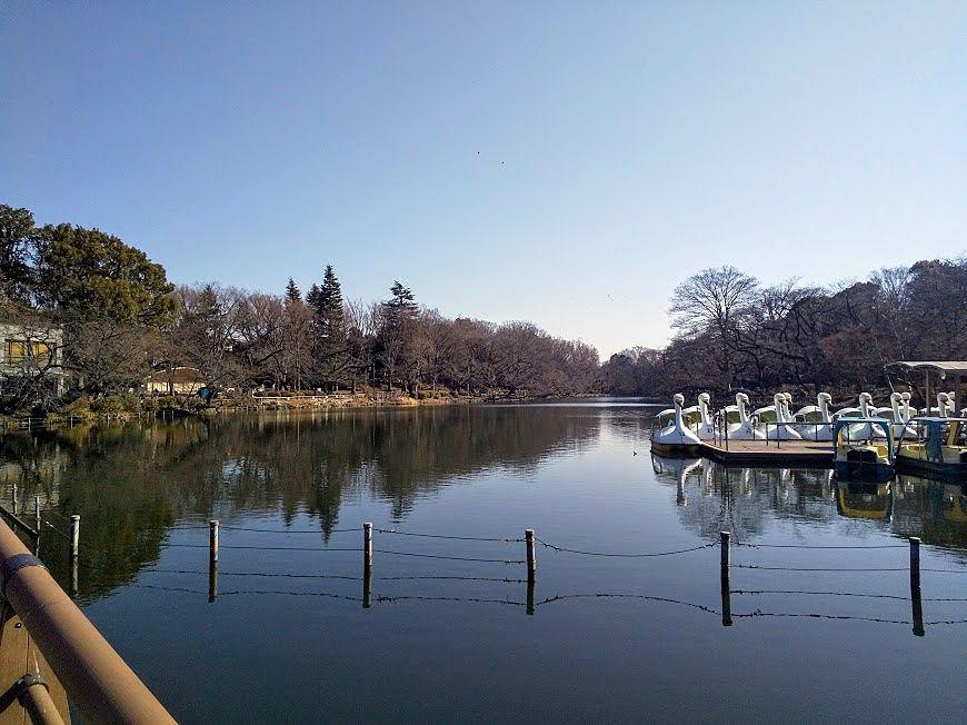 井之頭公園池