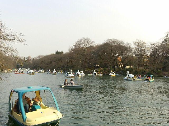 井之頭公園のスワンは凄い人気で、ボートでさえ待っている人が多いです