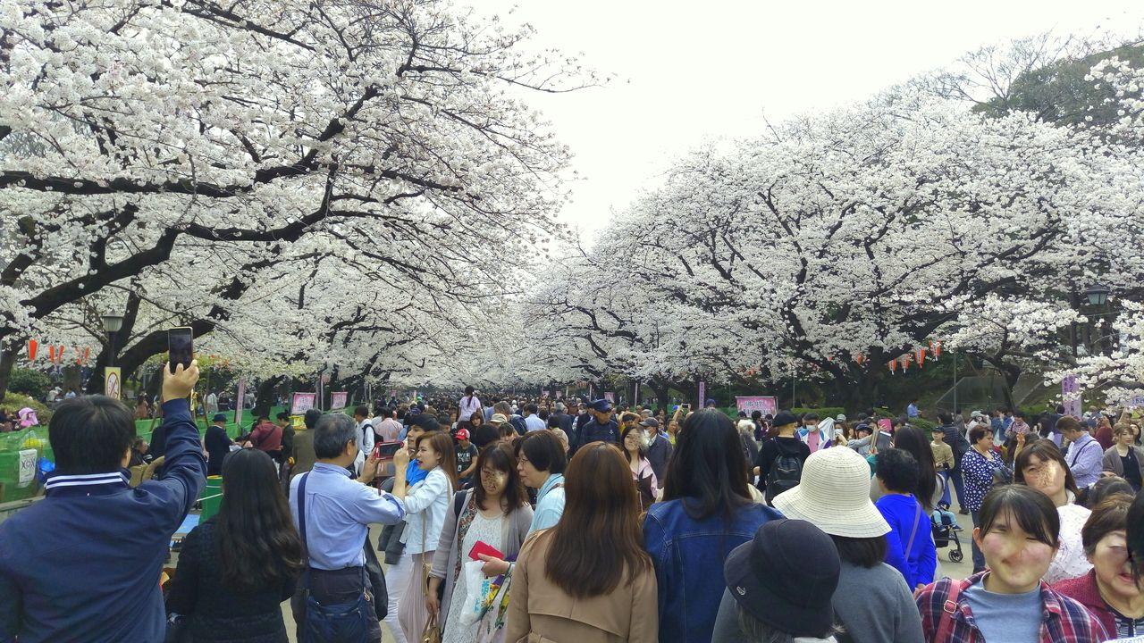 上野公園の桜まつり
