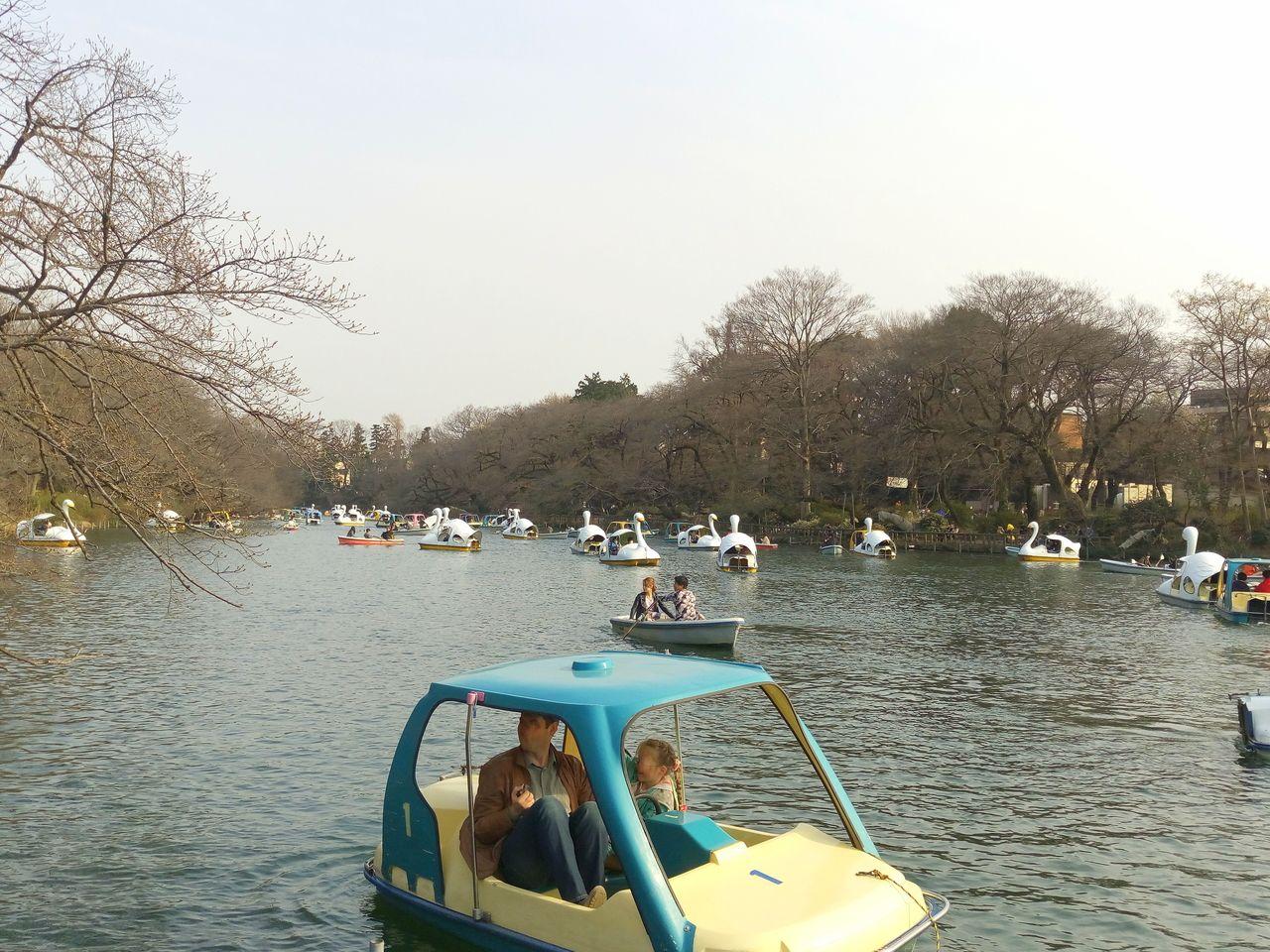 吉祥寺の井之頭池のボートは3種類
