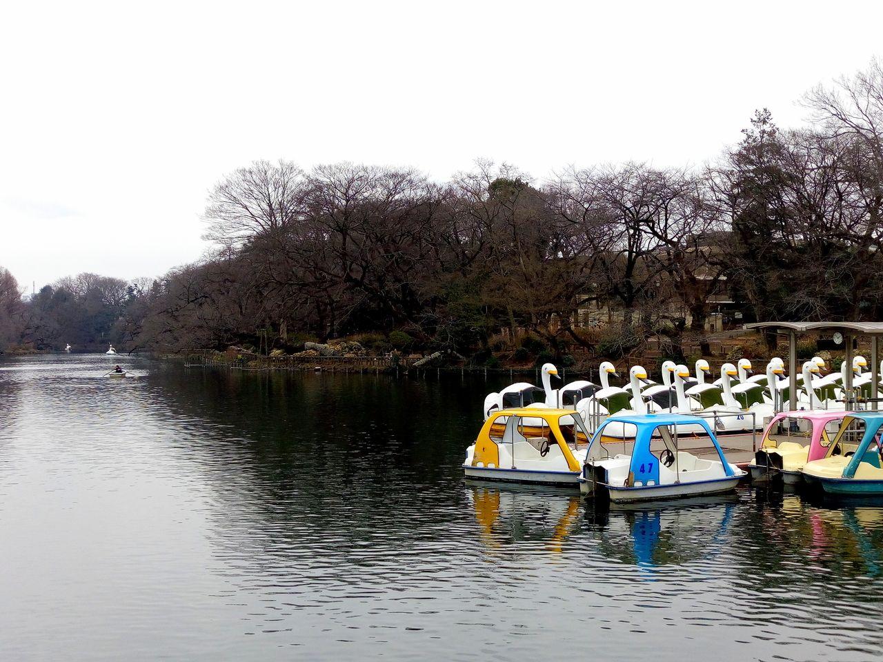 別れるか、別れないか試してみよう井之頭池のボート